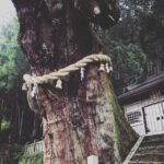 大湫(おおくて)のご神木、大杉が何百年も立っていた環境とは